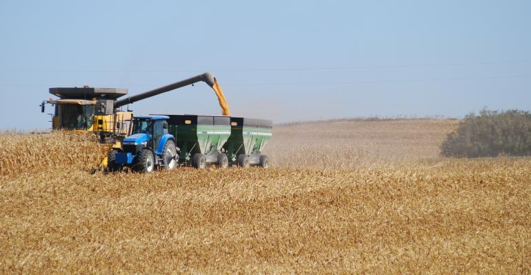 USDA Estimates Corn Prices Drop to $5/Bushel