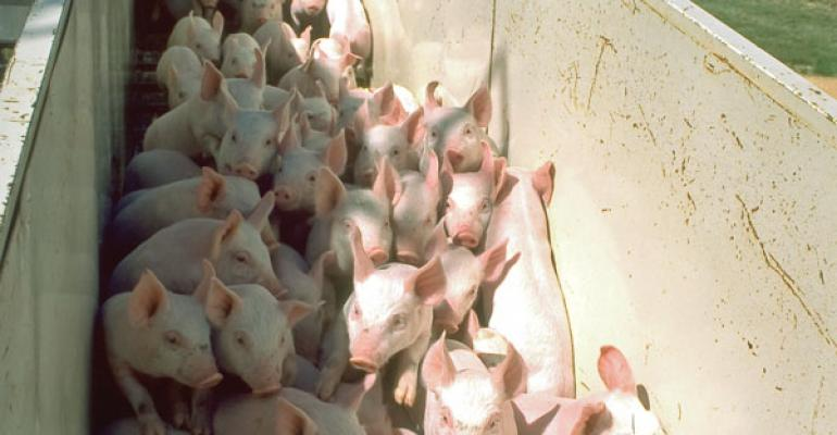 Vitamin D-Treated Pigs Perform Better