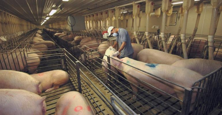How AI Technicians Affect Farrowing Rate, Total Born