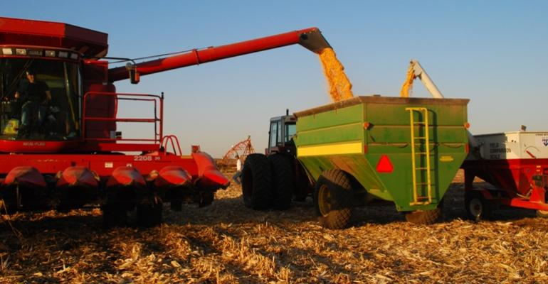 USDA Expects 75-Year-High Corn Acreage in 2012