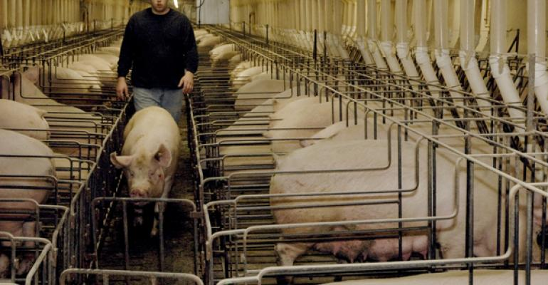 Eroding Margins, Strong Exports, Signal Possible Sow Herd Expansion