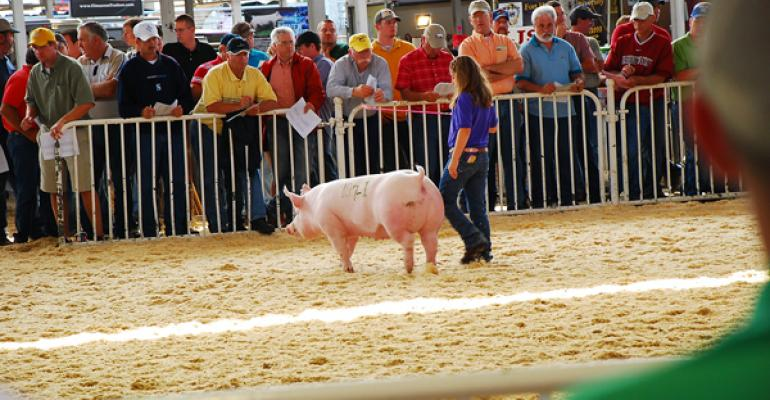 Minnesota Study: 4-H Pigs Present PRRS Risk to Industry
