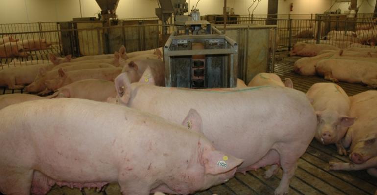 Safeway Plans for Gestation Stall-Free Pork Supply