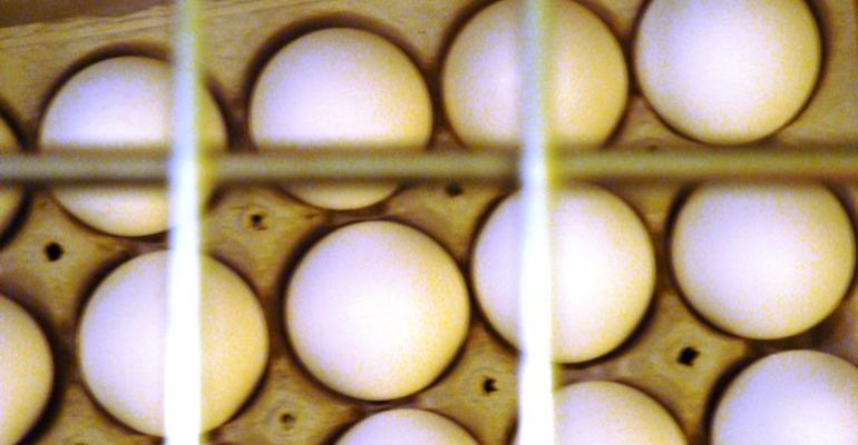 NPPC Bristles at Egg Legislation