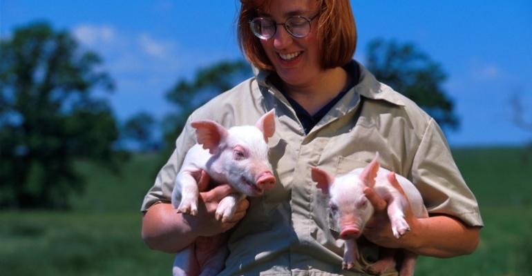 Swine Veterinarians Ask for More Active Role