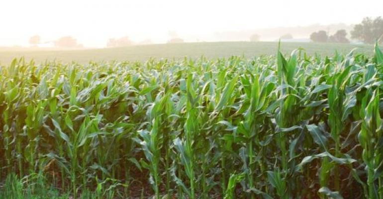 USDA Pre-Reports Offer Livestock, Crop Trends