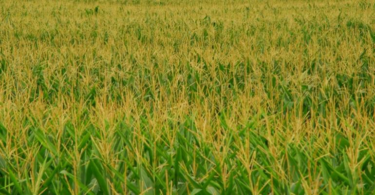 Farmers Plant One of the Largest Corn Crops Ever