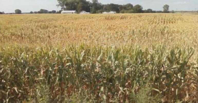 Drought May Last Into November