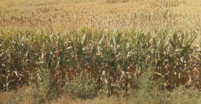 Drought Will Drive Up Food Prices