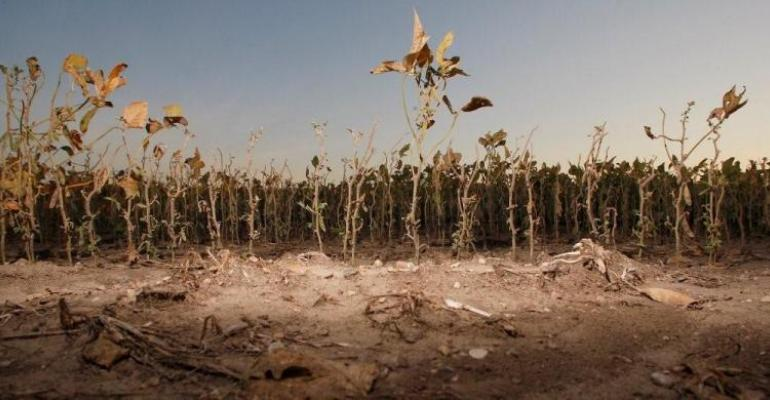 WASDE Report Hikes Grain Price Forecasts