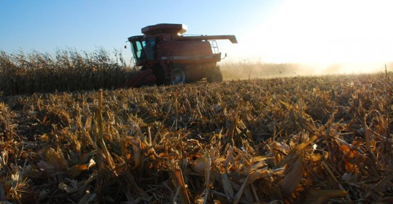 Precautions for Feeding 2012 Corn to Hogs
