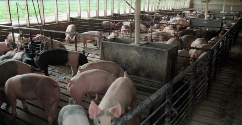 USDA Surveys Producers for Hog Inventory
