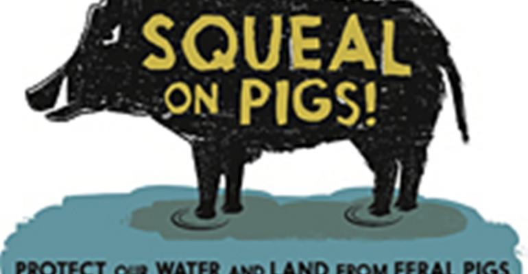 Pacific Northwest Launches Feral Swine Campaign