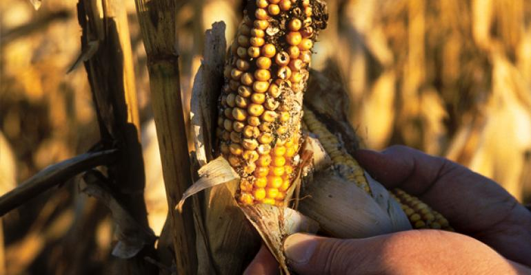 Be Vigilant about Grain Quality