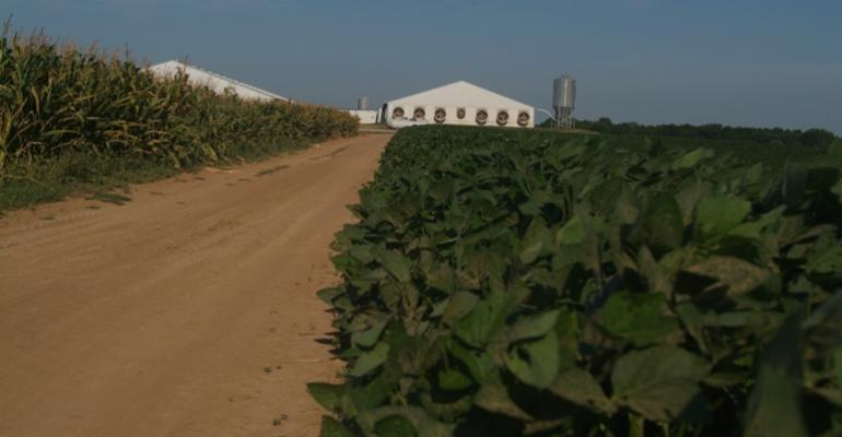 Soybean Futures Continue Surprising Slide