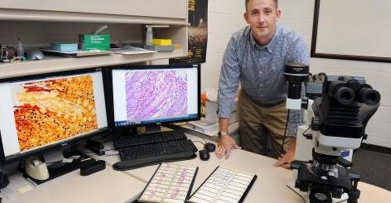 Eric Burrough is part of an effort to develop improved methods to diagnose swine dysentery a reemergent disease among swine herds