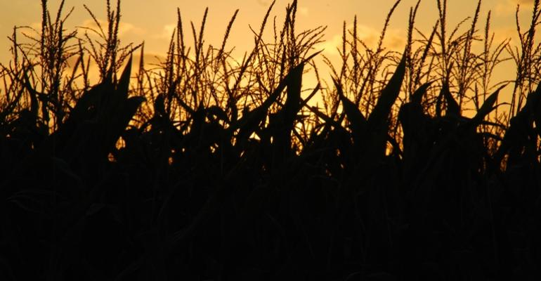 Drought Takes Extra Toll on Farmers