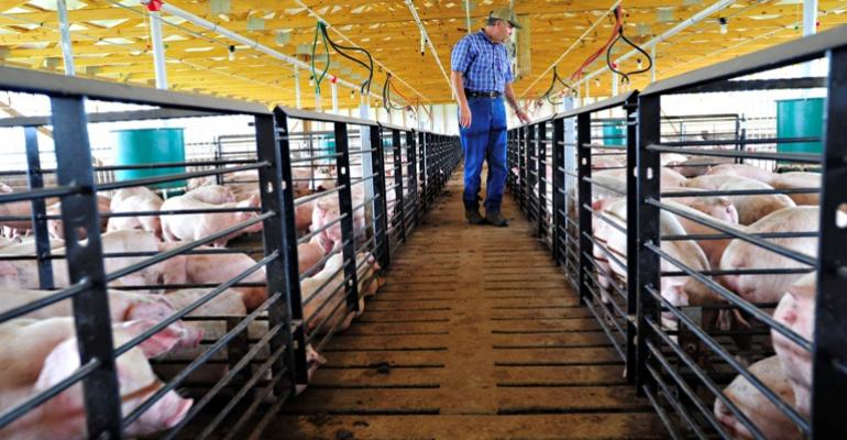 Is the Hog Market Back from the Abyss?