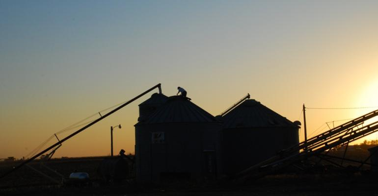 Rabobank predicts that grain prices will climb in the first half of 2013