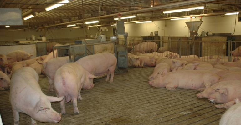 Studying the interactive effects of dietary DDGS and housing system on sows