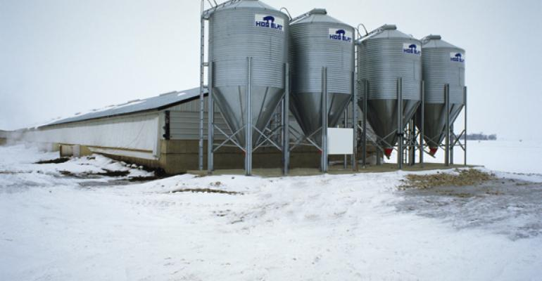 Cold weather can impact the prevalence of swine diseases