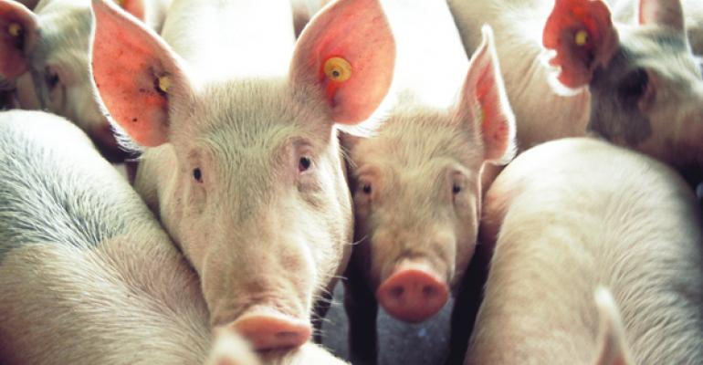 Investigating lowenergy diets for pigs