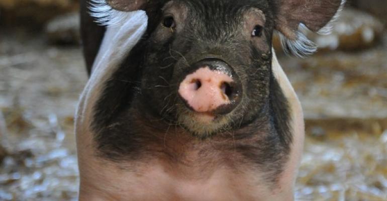 Prettiest Pig