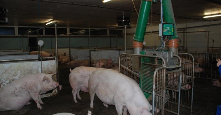 European Union member states are not ready for a ban on sow stalls