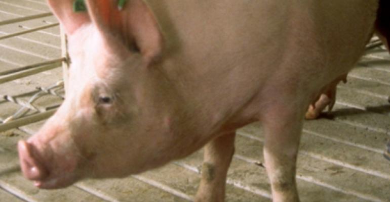 University of Alberta researchers investigated freeaccess sow stalls