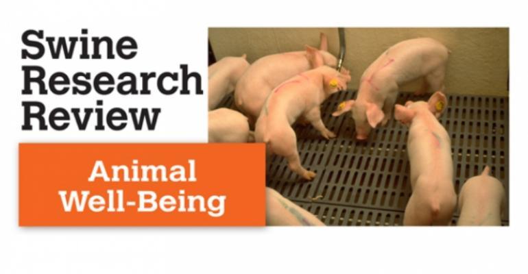 Swine euthanasia methods were investigated