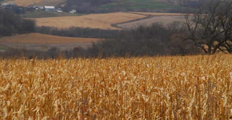 Contracting Corn Supplies Stress Users