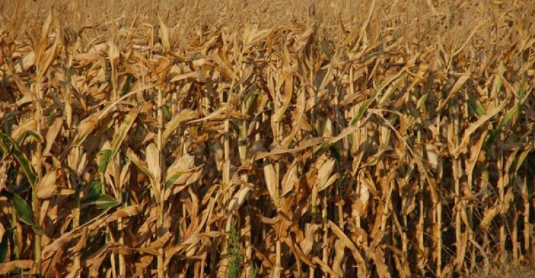 Drought impacted corn and soybean production