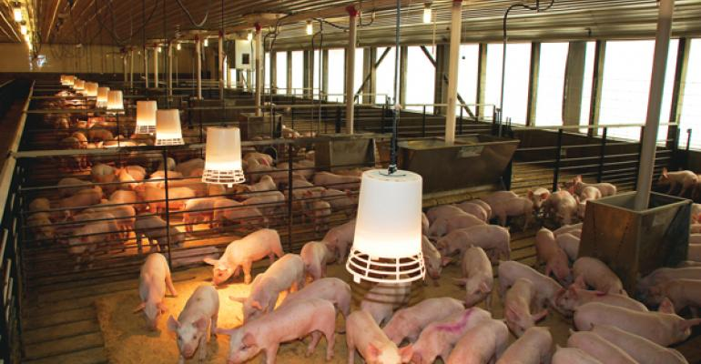 No second chances when it comes to saving pigs