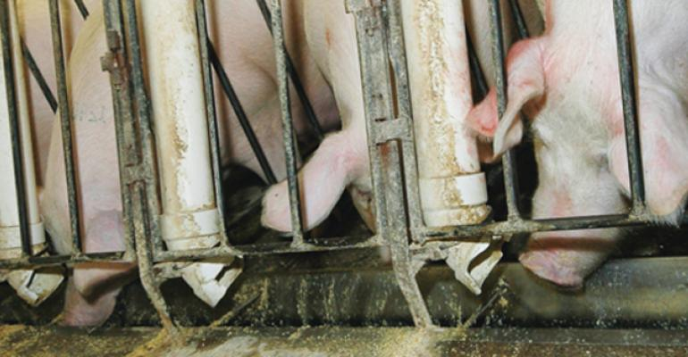 Gestation Diet's Impact On Pig Birth Weights