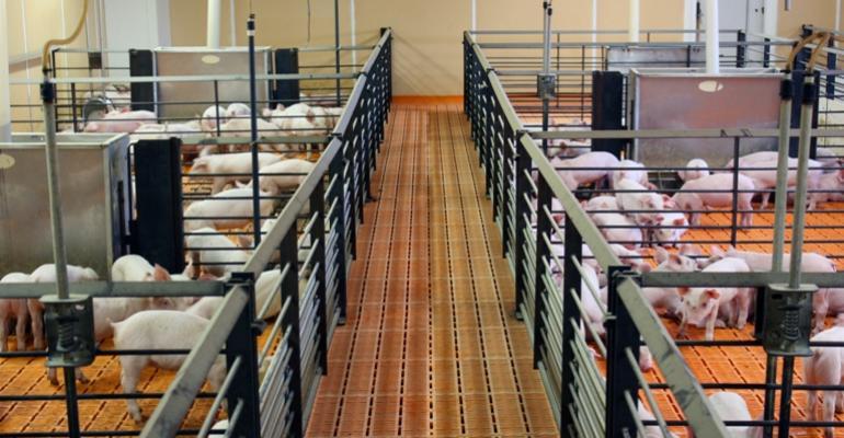 Nursery Pigs Favor Soybean Meal