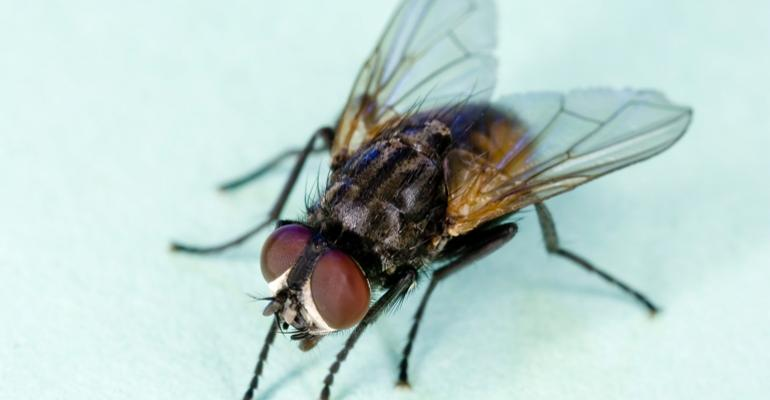 Scientists Develop Virus to Prevent House Flies from Reproducing