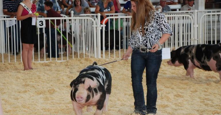 Taking Health Precautions at Upcoming Swine Shows
