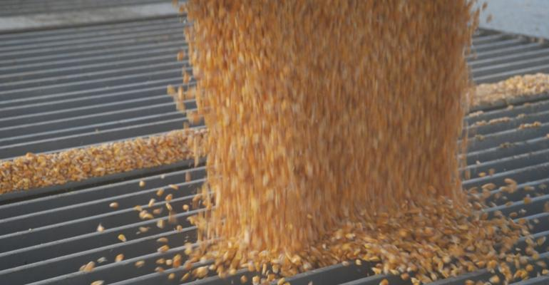Corn for ethanol