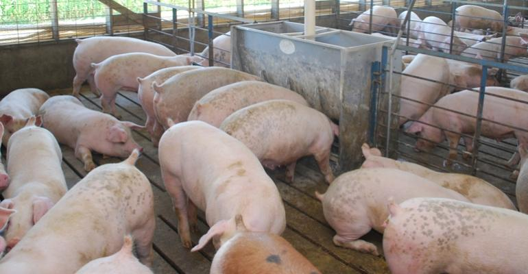 Pork Production: Is It Up or Down?