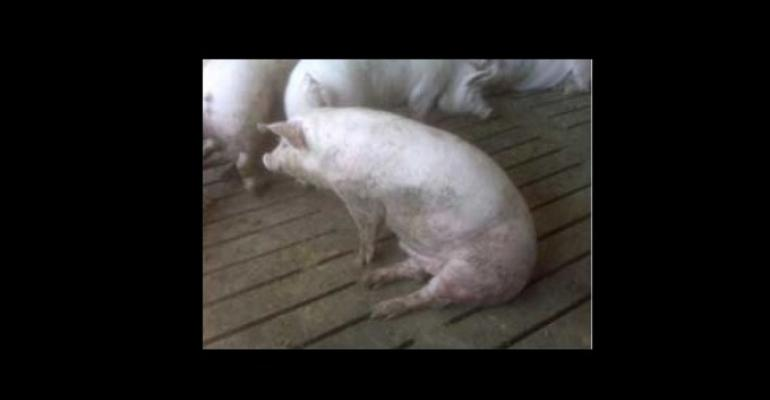 Why Can't Some Pigs Walk?