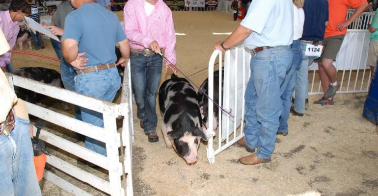 Follow Biosecurity Rules When Showing Pigs