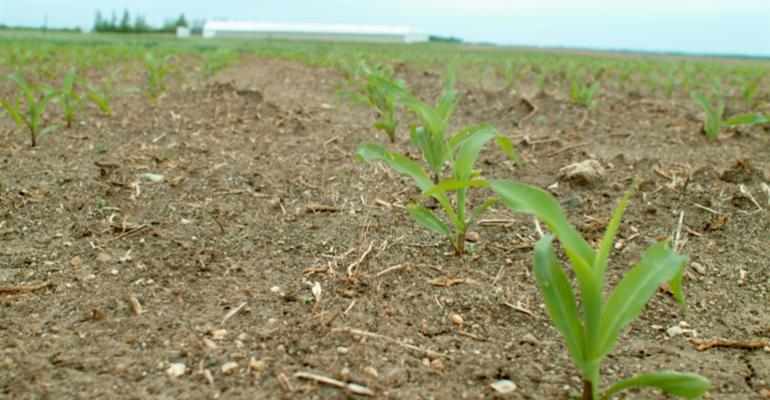 Corn planting is delayed by weather in Iowa