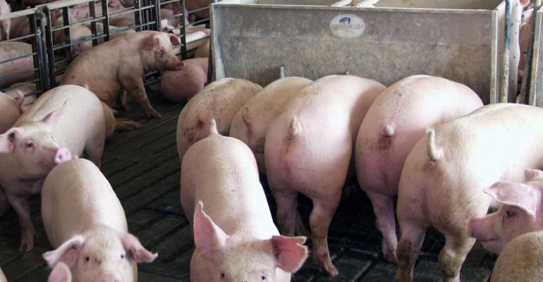 Pivotal Period Sets Hog Producers' Future