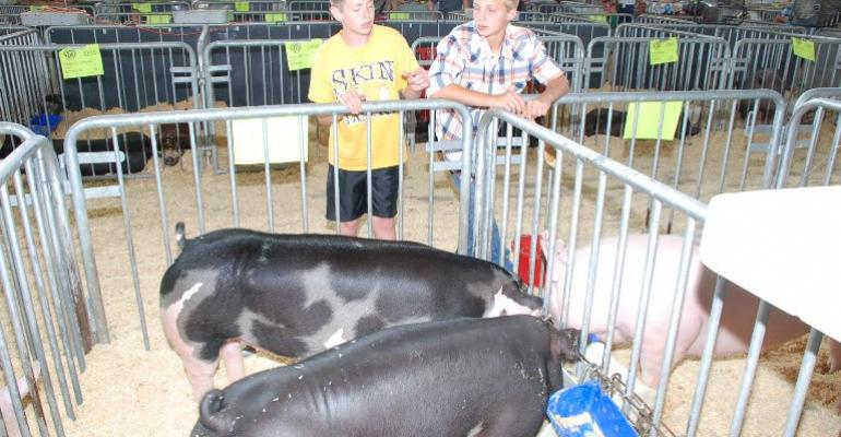Watch for PED Virus at Summer Fairs