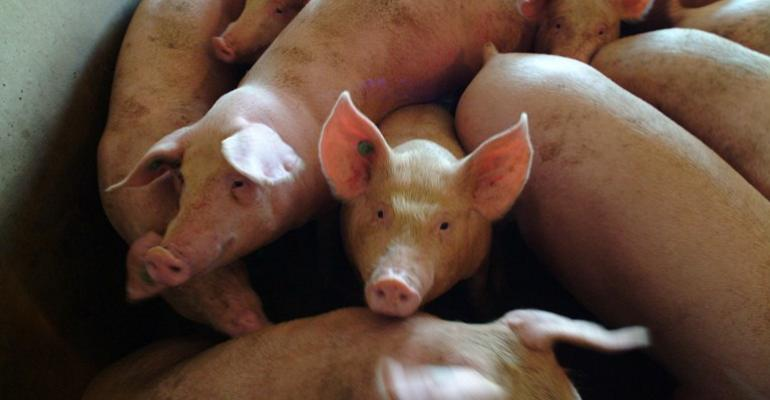 Hot Weather Scorches Hog Price Rebound