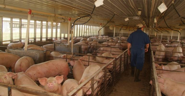 Hog Inventories Advance Slightly