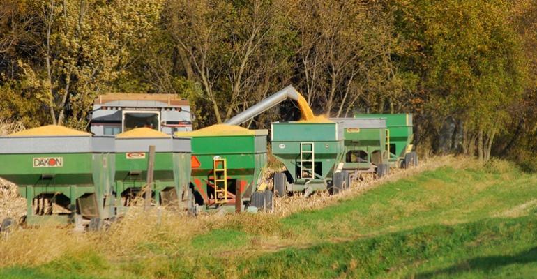 Cheaper Corn Fuels Hog Industry Growth