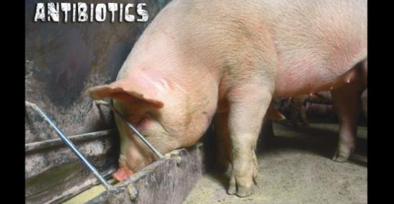 antibiotics for pigs