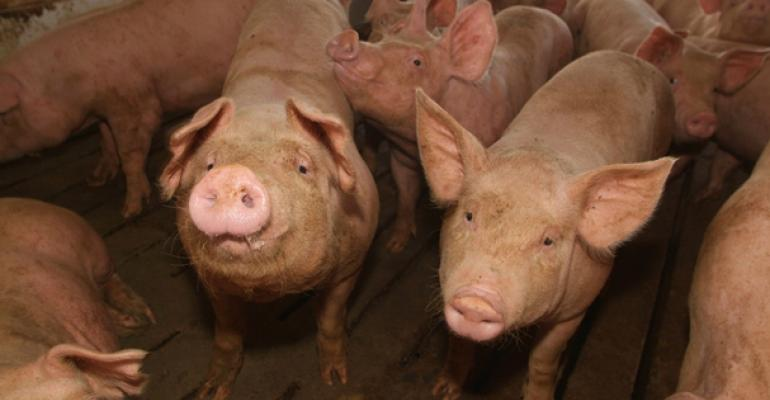 Hog Sector Records Strong 2013