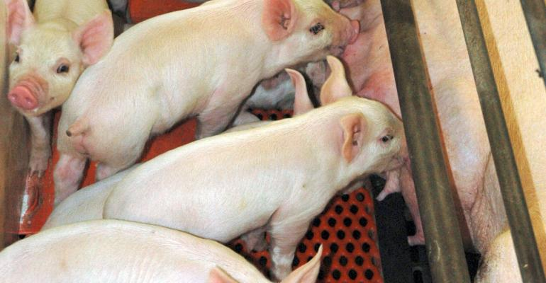 The governments of Canada and Ontario recently announced that will be providing funding to the pork industry which will help producers truckers abattoirs assembly facilities and rendering service providers step up their biosecurity measures to help stop the spread of porcine epidemic diarrhea virus PEDV